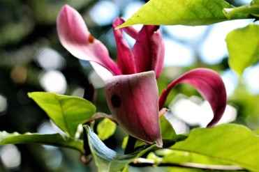 09 flowers